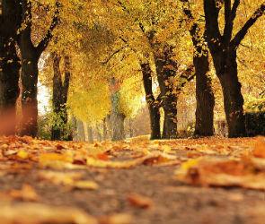 В последнюю неделю сентября в Воронеж придет осенняя погода