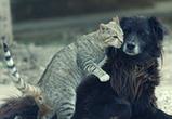 Воронежские депутаты и прокуратура поспорили о собаках и кошках