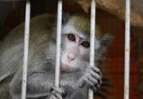 В Воронеже появился зоопарк