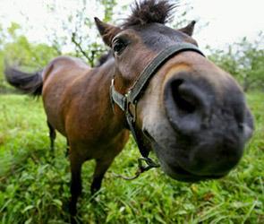 Украденная лошадь сбежала от цыган