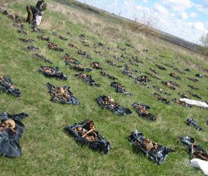 Под Воронежем поисковики обнаружили кладбище расстрелянных военнопленных