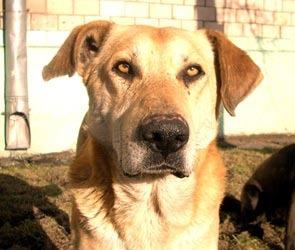 Бездомные собаки Воронежа: казнить или помиловать