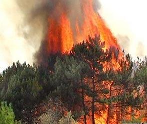 Лесной пожар под Воронежем (ВИДЕО)