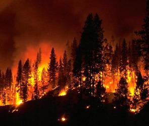 Пожары в Воронежской области, масштаб и последствия