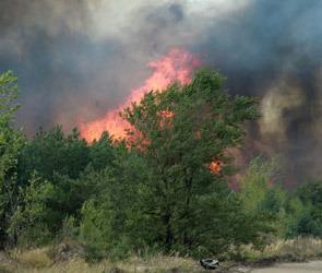 Последние новости о пожарах в Воронеже и Воронежской области