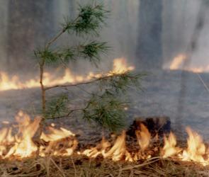 Последние данные о ситуации с пожарами в Воронеже и области