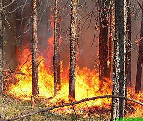 Крупный пожар в Лискинском районе Воронежской области