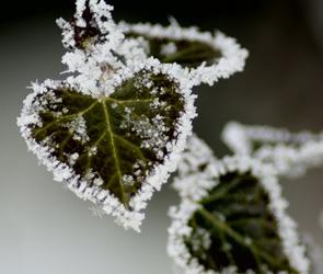В Воронеже в ближайшие дни ожидаются заморозки