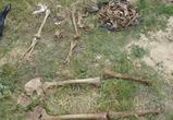 Под Воронежем найдены останки жертв сталинских  репрессий
