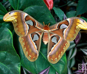 Живые тропические бабочки в Воронеже