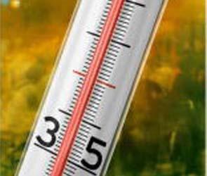 В ближайшее время Воронежскую область ожидает жара