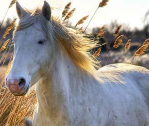 В Воронежской области цыган похитил коня стоимостью 700 тысяч рублей