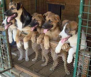 Приюты для бездомных животных могут появиться в Воронеже