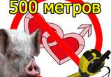 """21 октября пикет """"Свинский бизнес""""."""