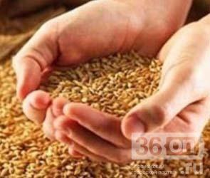 4 сельскохозяйственных рекорда установлены в Воронежской области