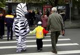 На больших дорогах «зебрам» делать нечего