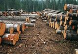 Строительная древесина в Воронеже