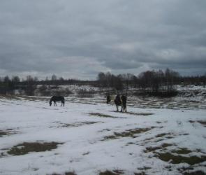 Земельные угодья в Воронежской области прошли досмотр