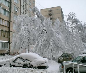 ЧП в  Воронеже:  дерево упало на машину и повредило ее