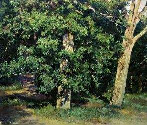 Какие деревья подходят для строительства - лиственные породы