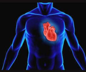Сердечное здоровье человека: предсказать приступ за две недели