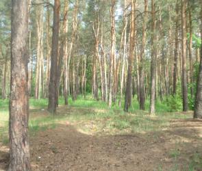 Воронежское лесное хозяйство сможет поучаствовать в проекте ВТБ