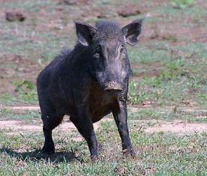 Управление Россельхознадзора проверило воронежские охотничьи хозяйства