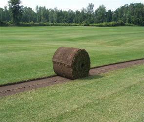 Как купить рулонный газон в Воронеже