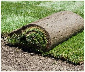 Рулонный газон - настил своими руками