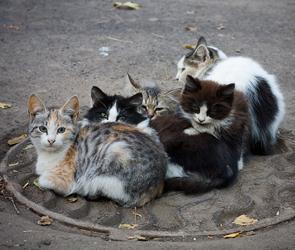 С любительницей кошек из Воронежа будет разбираться Роспотребнадзор