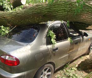 Дерево раздавило два автомобиля в Воронеже