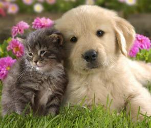 Опасный корм для кошек и собак продавали в Воронежской области