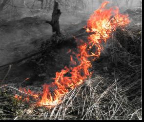 Четыре района Воронежской области находятся под угрозой пожаров