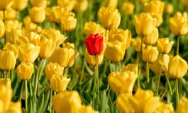 Какие цветы подарить любимой женщине