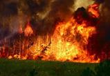 Под Воронежем горит 10 гектар леса