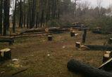 Дело о вырубке леса в Воронеже всё-таки возбудили