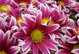 Цветы из Украины не пустили в Воронеж