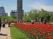 Праздник Великой Победы 9 мая в Воронеже 106432