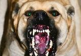 В Воронеже полицейские спасли  мужчину от нападения трех разъяренных собак
