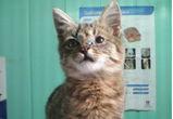 По факту истязания котенка на школьном дворе в Воронеже возбудили уголовное дело