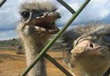 Воронежской птицефабрике «Интерптица» дали еще 5 месяцев на выплату долгов