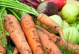Овощеводство в Воронежской области привлекательно для инвесторов