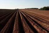 Воронежский «АгроСвет» застраховал свой будущий урожай на 225 млн рублей