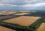 Воронежские власти переводят часть земель сельхозназначения в лесной фонд