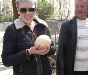 Джанкой 2014: Эдем в степи и страусиные яйца