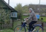 Белорусь, Подсвилье: заборовnet