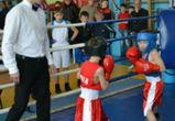 Бокс в Воронеже: спорт для сильных духом