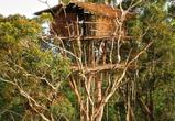 Самые невероятные деревянные дома