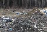 Северный лес в Воронеже превратили в несанкционированную свалку (ФОТО)