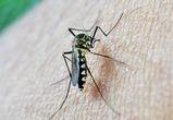 После укусов комаров четверо воронежцев заразились опасными паразитами